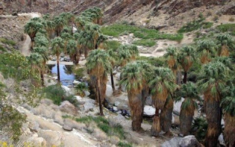 Indian Canyons – Agua Caliente