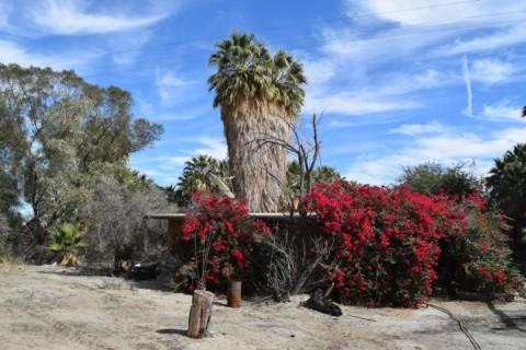 Coachella Movie Ranch